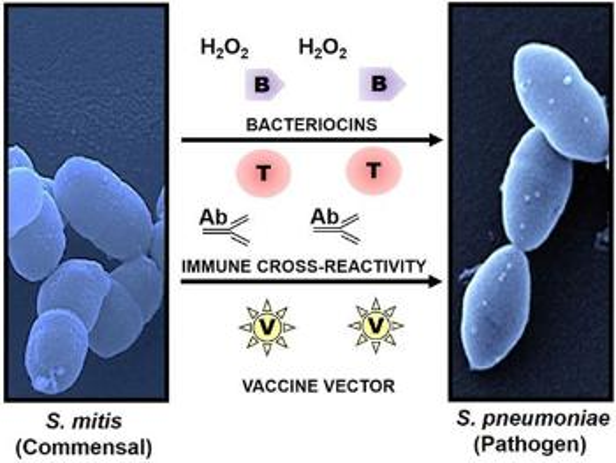 Bildet kan inneholde: organisme.