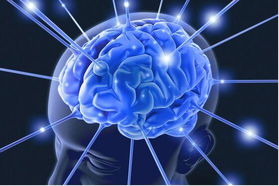 Bilde av hjerne